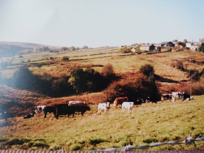 View of the farm from the hillside