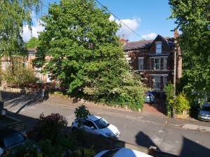 The view from Joe's upstairs flat includes tall leafy trees, large houses opposite and parked cars in driveways and on an empty road.