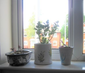 Three plants on Tony's window sill, in pottery plant pots with floral designs on them.