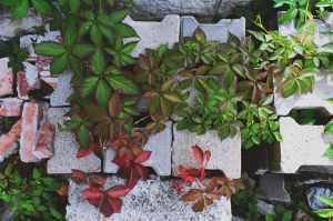 Plants growing through a pile of unused bricks