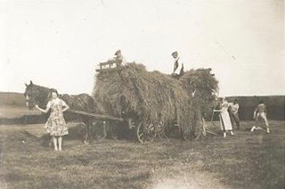 Linda's mother is standing holding the horse pulling a cart laden high with loose hay.  Two men wearing caps are sitting on the top of the rick, with three others behind gathering the hay.
